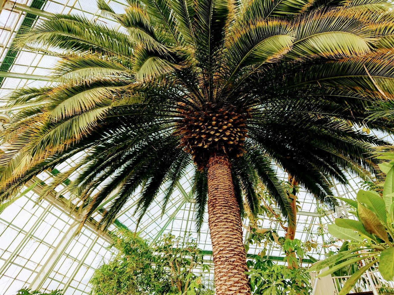 2020年函館熱帯植物園